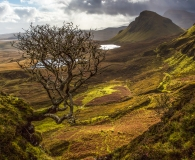 The tree at the Quiraing
