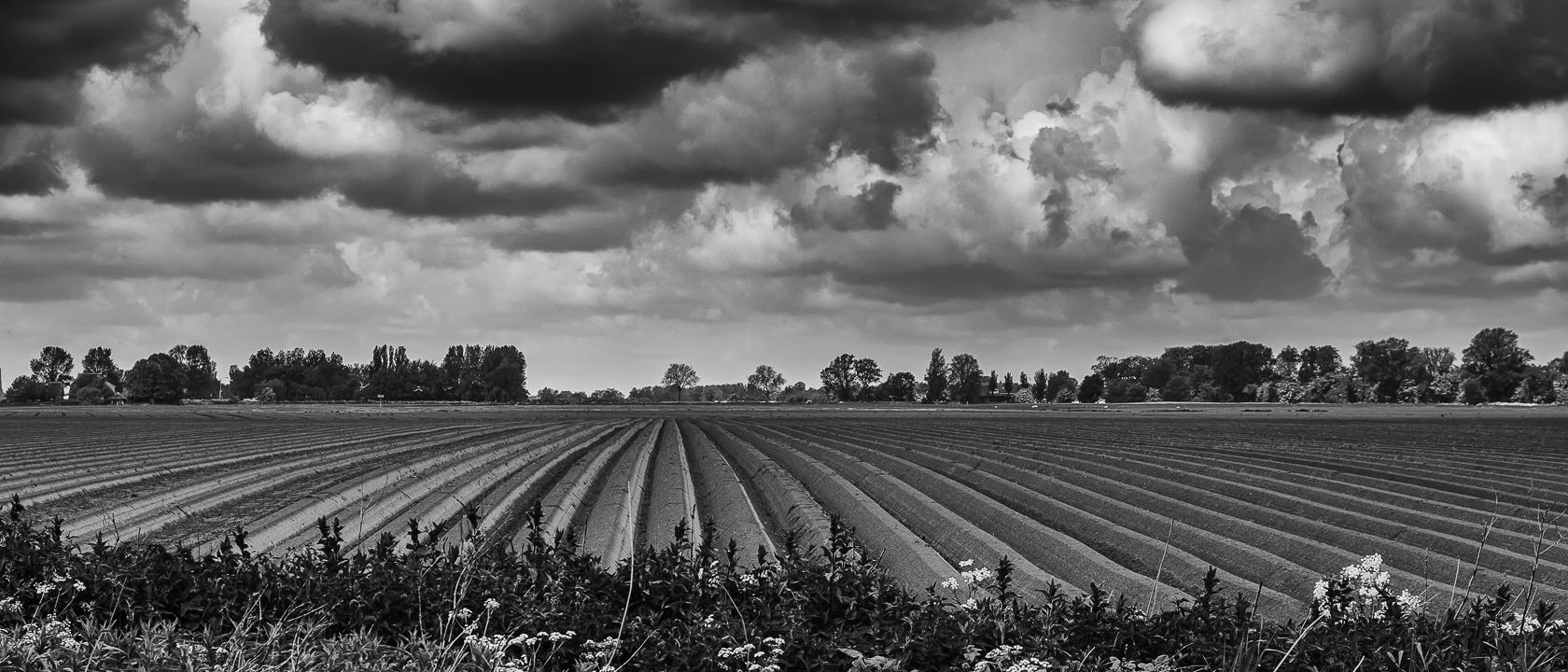 Het Friese landschap